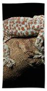 Tokay Gecko In Defensive Display Beach Towel