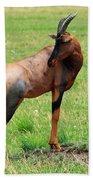 Topi Antelope On The Masai Mara Beach Sheet