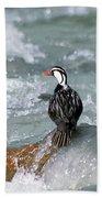 Male Torrent Duck Beach Towel