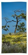 Torrey Pine On The Cliffs At Torrey Pines State Natural Reserve Beach Towel