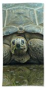 Tortoise Beach Towel