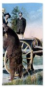 Tourist Feeding Bear Yellowstone Np Beach Towel