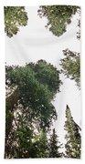 Towering Pine Trees Beach Towel