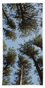 Towering White Pines Beach Towel