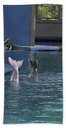 Trainer And The Tails Of A Duo Of Dolphins At The Underwater World Beach Towel