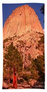 Tree At Devils Tower Beach Towel
