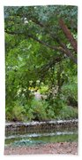 Tree At Norfolk Botanical Garden 4 Beach Towel