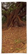 Tree At Royal Botanic Garden Beach Towel