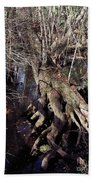 Tree Roots At The River Beach Towel