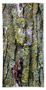 Tree Bark Detail Study Beach Towel by Design Turnpike