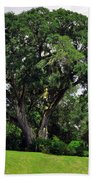 Tree By The River Beach Towel