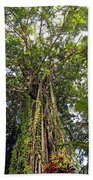 Tree Canopy Beach Towel
