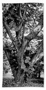 Tree Giant Beach Towel