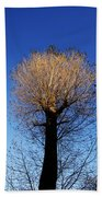 Tree In Afternoon Sunlight Beach Towel