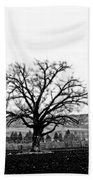 Tree In Black And White Beach Towel