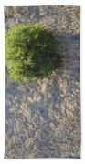 Tree In Grass From Balloon Beach Towel