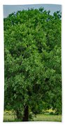 Tree In Nature Beach Towel