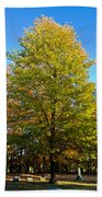 Tree In The Cemetery Beach Towel