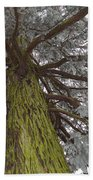 Tree In Winter Beach Towel