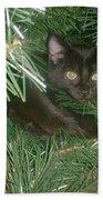 Tree Kitten Beach Towel