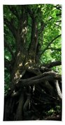 Tree On Pierce Stocking Scenic Drive Beach Towel by Michelle Calkins
