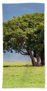 Tree On Savannah. Ngorongoro In Tanzania Beach Towel