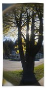 Tree On The Street Beach Towel