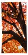 Tree Orange Blast Beach Towel