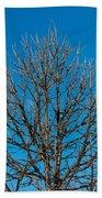 Tree Profile Beach Sheet