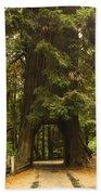 Tree Redwood Ca 7 Beach Towel