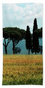 Tree Row In Tuscany Beach Towel