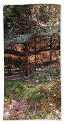 Tree Series 46 Beach Towel