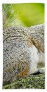 Tree Squirrel Beach Towel