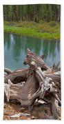 Tree Stump In Des Chutes Nf-or Beach Towel