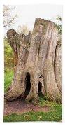 Tree Stump Beach Towel