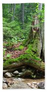 Tree Stump - White Mountains New Hampshire Beach Towel