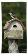 Tree Swallow With Young Beach Towel