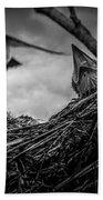 Tree Swallows In Nest Beach Sheet