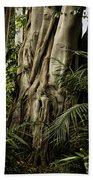Tree Trunk And Ferns Beach Towel