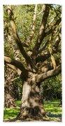 Tree Trunk And Limbs Beach Towel