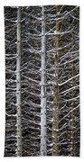 Tree Trunks In Winter Beach Towel by Elena Elisseeva