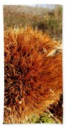 Tree Urchin Beach Towel