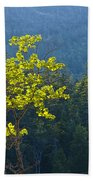 Tree With Yellow Leaves In Acadia National Park Beach Towel
