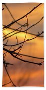 Trees Ablaze In Autumn Beach Towel