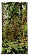 Trees At Olympic National Forest Beach Towel