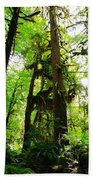 Trees In The Hoh National Rain Forest Beach Towel
