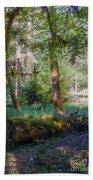 Trees Of The Rainforest Beach Towel