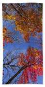 Treetops In Fall Forest Beach Towel