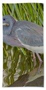 Tri-colored Heron Beach Towel