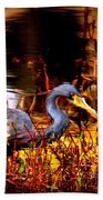 Tri Colored Heron - Reflection Beach Towel